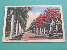 Royal Poinciana Tree & Royal Palms Fort Myers Florida US Postcard