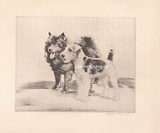 Chow Dog And Fox Terrier Amazing Vintage Dog Print 1932 Diana Thorne