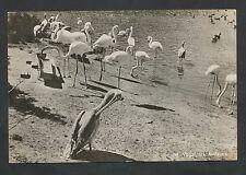 Alphen a/d Rijn  Avifauna  Flamingo strand