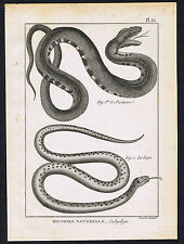 Le Piscivore (Fish eater) - La Lisse (Smooth sPanckoucke Snakes 1789 Herpetology