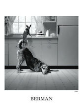 BUSTED ART PRINT HOWARD BERMAN 18x24 funny dogs in kitchen standing humor poster