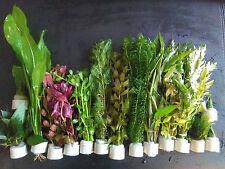 """Wasserpflanzen Set """"Best of plants"""" bis 150l, 15 Bunde, 90-120 Aquariumpflanzen"""
