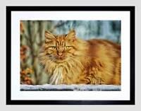 ANIMALS NATURE CAT FELINE FACE EYES ANIMAL PET GINGER FRAMED ART PRINT B12X5068