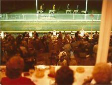 Pair of Greyhound Racing Photos - Seventies - Leeds Greyhounds.