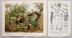 Farn, Farne - Diverse Abbildungen, 2 Blatt - Chromolithographie + Holzstich 1896