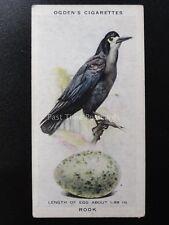 No.34 ROOK  - British Birds & Their Eggs by Ogdens Ltd 1939