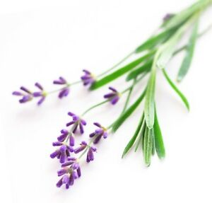 Lavande Eau Florale 250ml Visage Nettoyant Toner Soins De La Peau