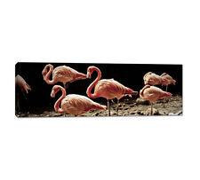 150x50cm Leinwandbild Panorama Foto Flamingos Rosa Tiere Fotografie Caro Art