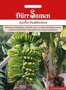 Bananenbaum Bananenpflanze Bananensamen Saatgut Palme Palmensamen Yukka Palme