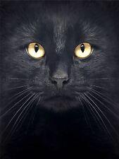 PHOTOGRAPHY COMPOSITION CLOSE UP PET BLACK CAT FACE EYES POSTER PRINT BMP10400