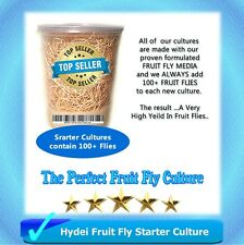 Fruit Fly Starter Culture (Flightless - Drosophila Hydei) + FREE Fruit Fly Kit