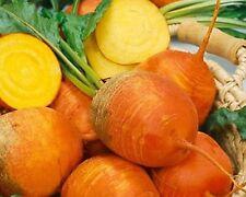 Beet Detroit Golden - Sweeter Milder Flavor  Nutricious 100+ Seeds