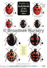 Laminated Field Guide to LADYBIRDS OF THE BRITISH ISLES Identification Chart
