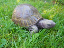 Latex mould of a tortoise