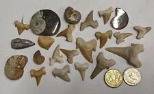 FOSSIL COLLECTION - Goniatite Ammonite Shark Orthoceras (#U321)