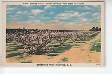 Peach Trees in Blossom Greetings from Manning Sc E4895