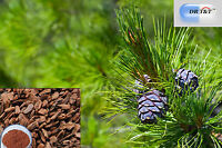 DR T&T 100% pure pine bark pure extract powder with high anthocyanidins 90%
