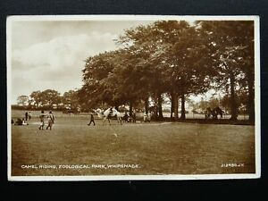 Bedfordshire CAMEL RIDING at Whipsnade Zoological Park c1931 RP Postcard