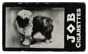 Societe Job - 'Dogs' - Sheep Dog