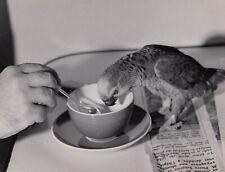 ©Michel Brodsky , le Perroquet 1960