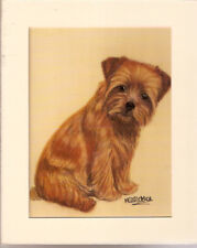 Matted Print: Norfolk Terrier by Mc Fletcher Who Me? Last One!
