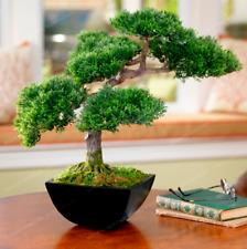Japanese Mini Ornamental Pine Plants Osaka Bonsai Pine Tree Garden 50 Pcs Seeds