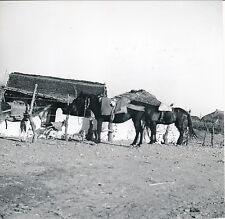 ESPAGNE c. 1950 - Région de Malaga - Div 4136