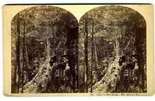 vintage photo MT DESERT Maine ME Bradley stereoview Mount Bar Harbor CAVE GORGE
