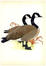 Canada Goose by Athos  Menaboni - Book Plate - Vintage Wall Hanging