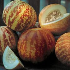 Hungarian Tigger melon, 90 days, sweet flavour, 10 seeds