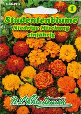 Studentenblume,Mischung,Saatgut,Tagetes patula nana,Blume,Chrestensen,NLC 1