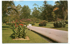 Botanical Garden Singapore postcard