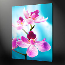 ORCHID FLOWER CANVAS PRINT PICTURE WALL ART DESIGN