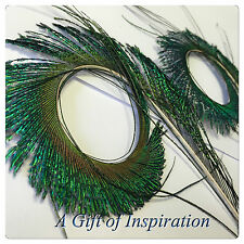 2 Unique Hand Trimmed Curly Peacock Sword Feathers 15cm DIY Art Craft Millinery