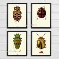 Unframed Ladybug Beetle Print Set of 4 Antique Garden Insects Home Room Wall Art