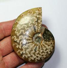 Ammonit 79x62 110 Gramm