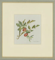 Edward Morgan (1933-2009) - Signed & Framed 20th Century Watercolour, Rosehips