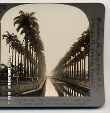 PALM-FRINGED RUA VISCONTE DE ITUANA AND MANGUE CANAL - STEREOVIEW