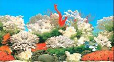 "Vivarium / Aquarium WHITE CORAL Background 15"" Tall Poster Fish Tank Picture viv"