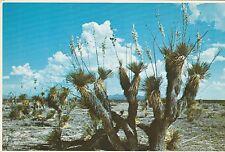 "*New Mexico Postcard-""Desert Yucca or Spanish Batoney"" (U2-NM7)"