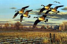 """Cynthie Fisher """"Dropping In Canadian Goose"""" Print SN   20.75"""" x 13.5"""""""