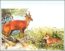 Cerf aboyeur Red Muntjac Barking Deer AUTOCOLLANT STICKERS IMAGE ANNEES 60s