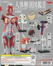 立體百科事典人體解剖圖鑑Yujin 3D CAPSULE ENCYCLOPEDIA HUMAN ANATOMY MINIATURE INTESTINAL 3