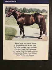 STORM CAT Photo  Horse Racing CHAMPION SIRE