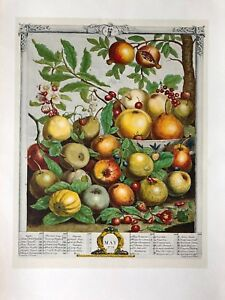 Robert Furber Twelve Months of Fruits: May Etching Print, 1970, Penn Prints