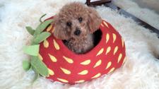 Shep's Strawberry CAT CAVE 100% Wool Handmade Cat Cozy Pet Bed Kitty