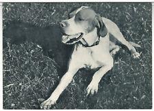 DOG English Pointer Russian B/W Vintage Real Photo Postcard