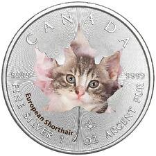 1 Oz Silber Maple Leaf Farbe 2017  Cute Kittens Europäische Kurzhaarkatze Cat Ka