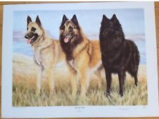 More details for belgian shepherds- by sue driver signed ltd ed 127/850- dog