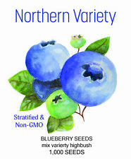 1000 NORTHERN BLUEBERRY BUSH PLANT SEEDS